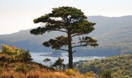 2 linii brzegowych drzewo Zdjęcia Stock
