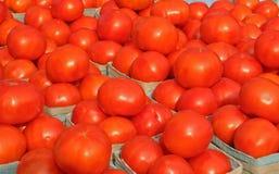 2 ljusa tomater Arkivbilder
