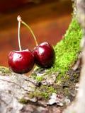 2 mörkröda Cherry arkivbilder