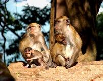 2 małpa Obraz Royalty Free