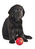 2 maand oud Labrador retrieverpuppy met een bal royalty-vrije stock afbeelding