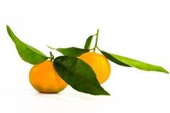 2 mandarins Stock Afbeeldingen