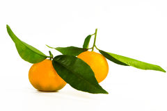 2 mandarins Stock Images