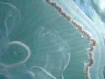 2 meduz. Zdjęcia Stock