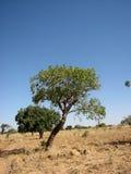 2 mot treevärlden Fotografering för Bildbyråer