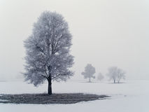 2 mroźnego mglistego drzewa Fotografia Royalty Free
