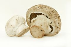 2 mushrooms Royalty Free Stock Image