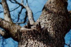 2 na drzewo. Zdjęcia Royalty Free