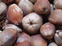 2 naturliga rent för kokosnöt royaltyfri foto