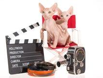 2 nette Sphynx Kätzchen mit Filmstützen Stockbilder