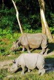 2 nosorożec s Obraz Royalty Free