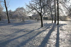 2 objętego lodowe drzewa obraz stock