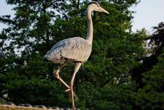 2 oiseaux stationnent le régent s Image libre de droits