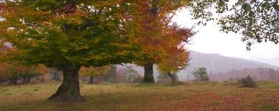 2 oktober Royalty-vrije Stock Foto
