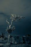 2 osamotniony drzewo Fotografia Stock