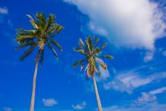 2 palm trees on a blue sky Stock Photo