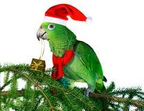 2 papegoja santa Arkivbild