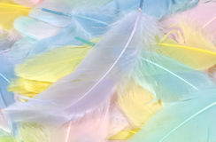 2 pastellfärgade fjädrar fotografering för bildbyråer