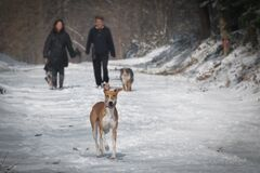 2 Person and 2 Dog Walking in the Snow during Daytime Stock Photo