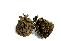 2 pine cones Royalty Free Stock Photography