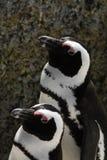 2 pinguïnen die zich naast elkaar bevinden Stock Afbeelding