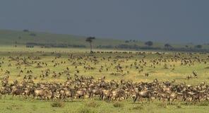 2 plaines de masai de mara Photos libres de droits
