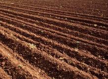 2 pola rolnicze obraz royalty free