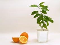2 pomarańcze Obraz Royalty Free