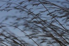 2 praire traw Obrazy Stock