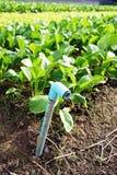 2 rørpvc-grönsaker Royaltyfri Fotografi