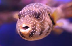 2 roliga tropiskt för fisk Arkivfoto