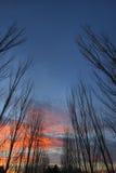 2 rzędu drzew zdjęcia stock