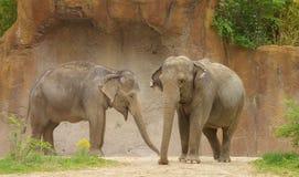 2 słonie obrazy stock