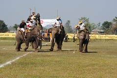 2 słoni polo Obrazy Royalty Free