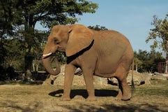 2 słonia Zdjęcia Stock