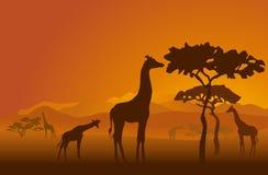 2 safari