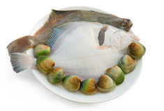 2 Sand Flounder fish and Clams. 2 Sand Flounder fish and some Live Clams in a plate ready to cook Royalty Free Stock Image