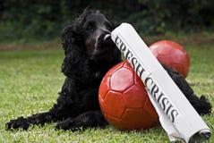 2 sfere di calcio con il titolo & il cane da guardia di giornale Immagine Stock