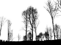 2 shadowtrees πανοράματος Στοκ Φωτογραφία