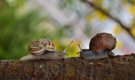 2 Snail Facing Each Other Stock Images