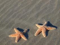 2 Starfish с тенями Стоковые Изображения