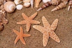 2 starfish стоковые фотографии rf