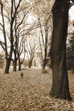 2 stora trees var Royaltyfri Foto