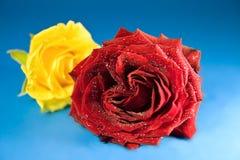 2 tło błękitny czerwieni różany kolor żółty Zdjęcia Stock