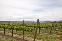 2 tło stonehenge winnica Zdjęcie Royalty Free