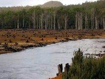 2 tasmańskie ekologicznej lasów wandalizm zdjęcia royalty free