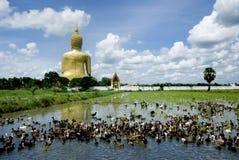 2 tillbaka stora buddha änder Royaltyfri Bild