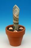 2 tillgångar som växer pengar, kärnar ur Royaltyfri Foto