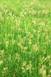 2 traw ranek Obrazy Royalty Free