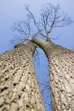 2 trees Στοκ Φωτογραφία